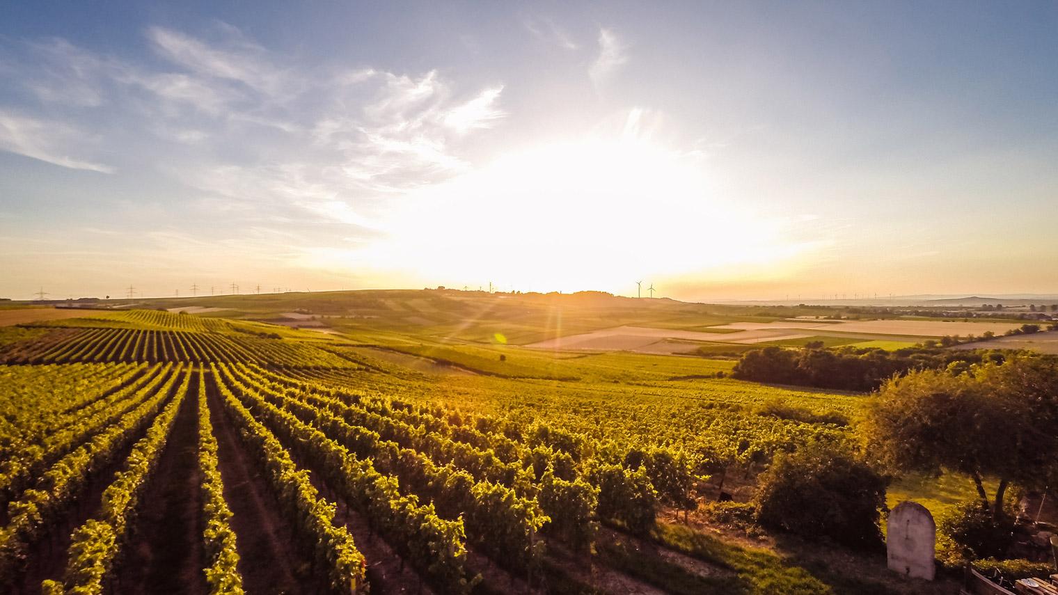 Weedenborn Wein