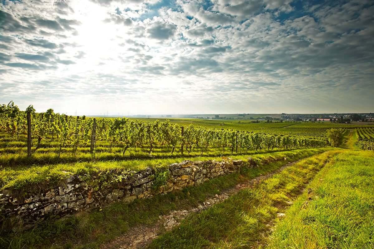 Weingut Wittmann Wein Berg
