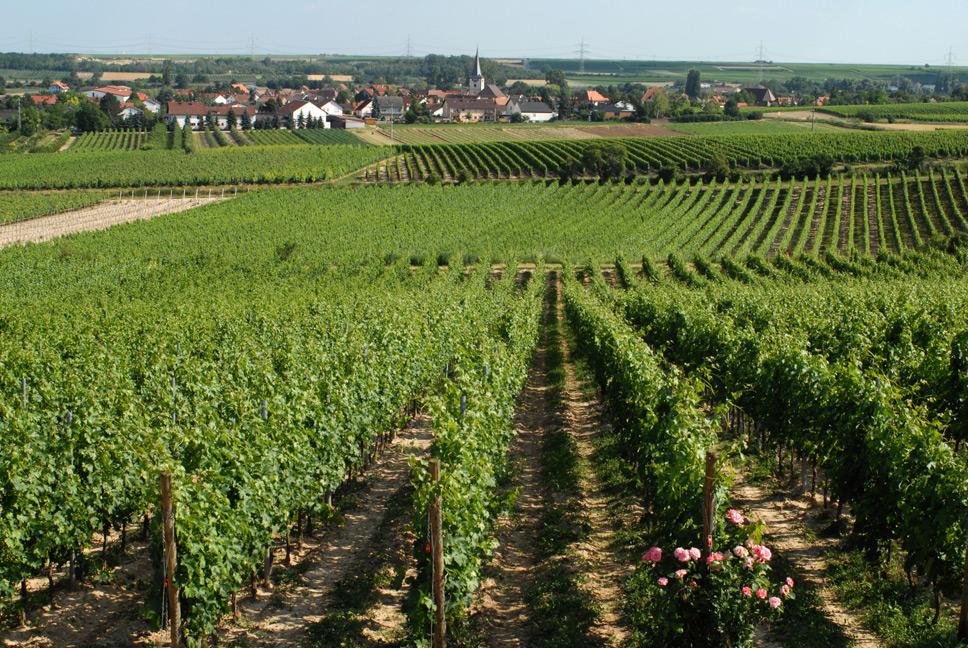 Knisper Wein Lage