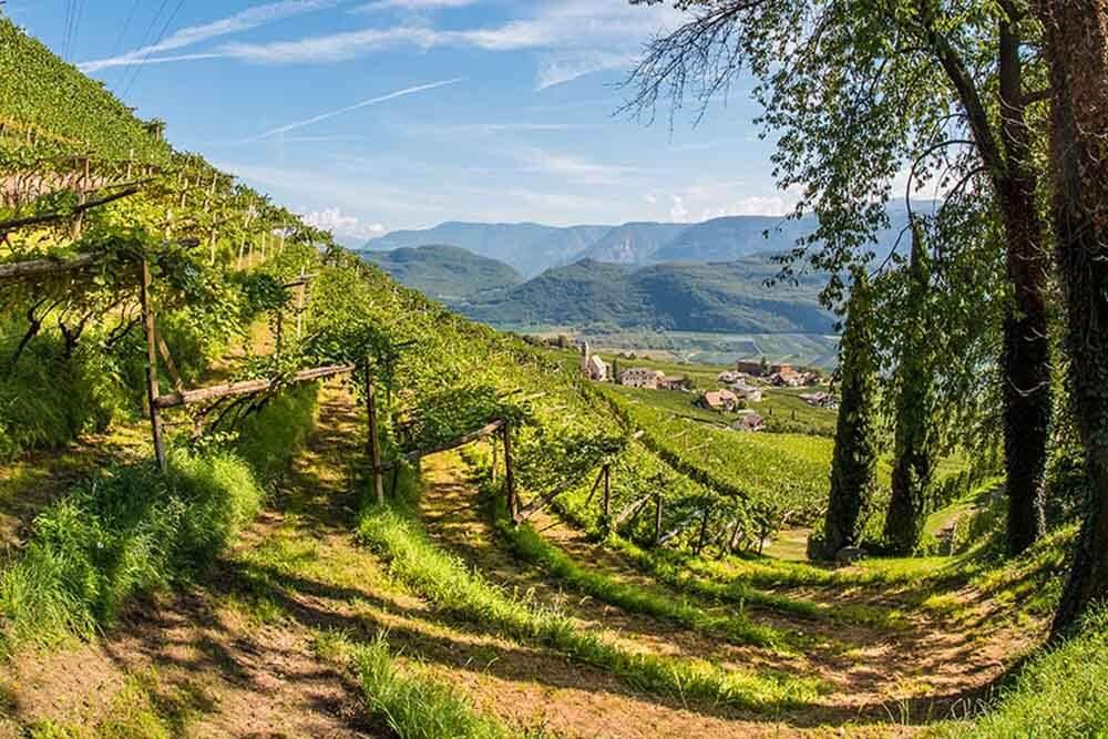 Cantina Tramin Heimat Wein