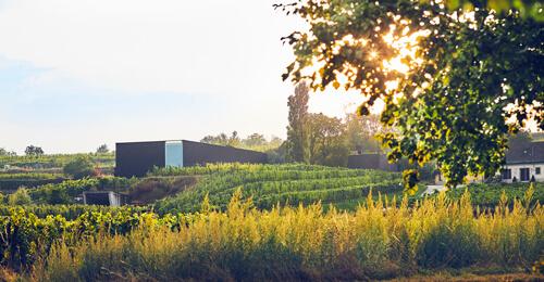 Weingut Loimer Langenlois
