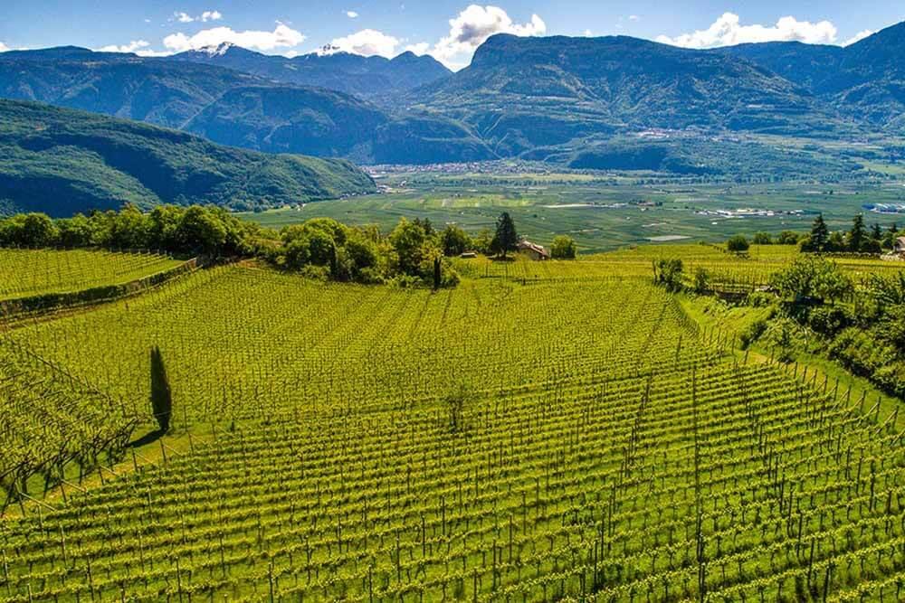 Cantina Tramin Wein Berge