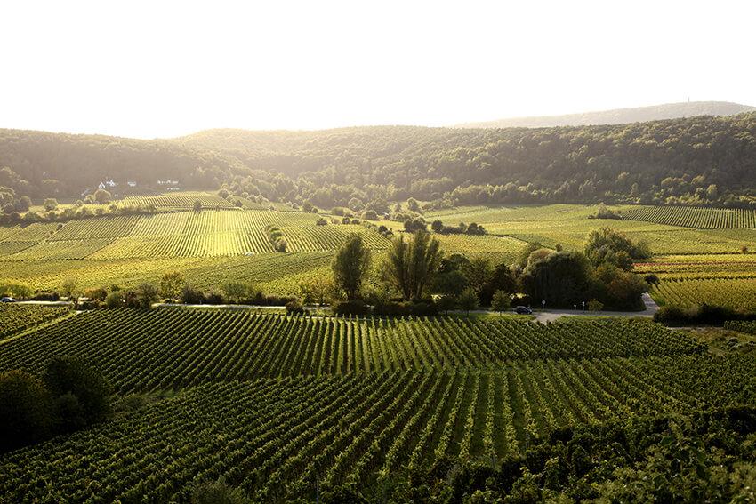 Pflüger Wein Berg