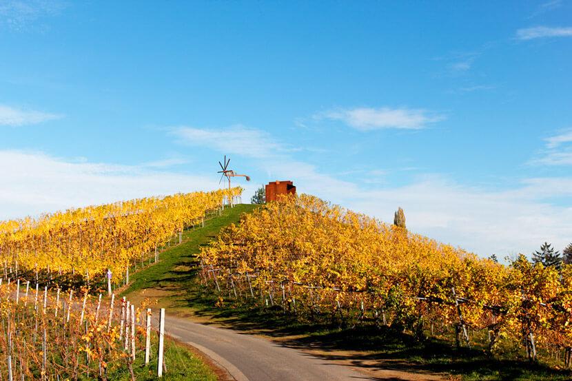 Sattlerhof Kranachberg Wein